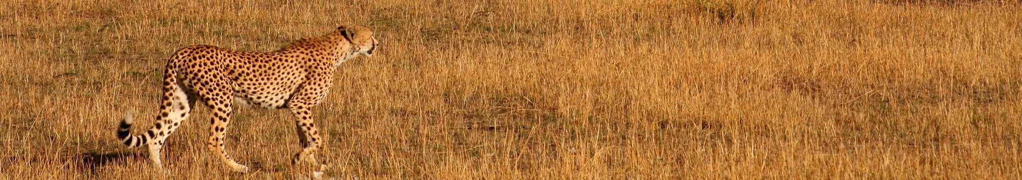TR-header-18-crop